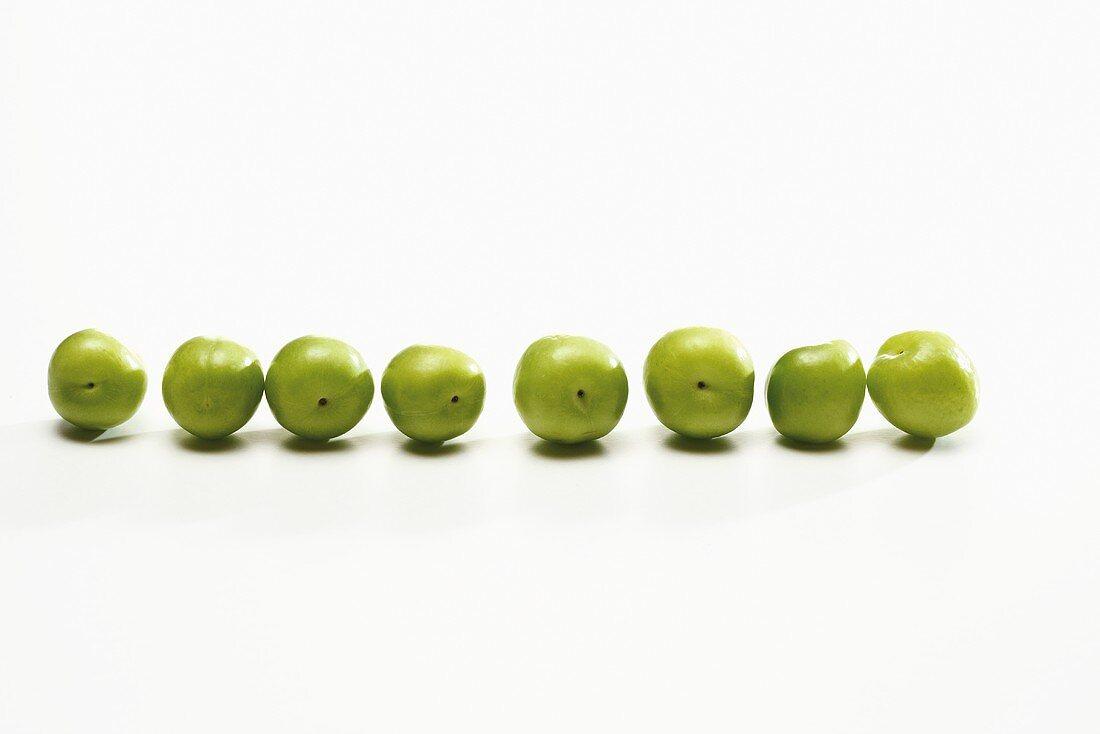 Grüne Pflaumen (Sorte Canerik, türkische Pflaumen) in einer Reihe