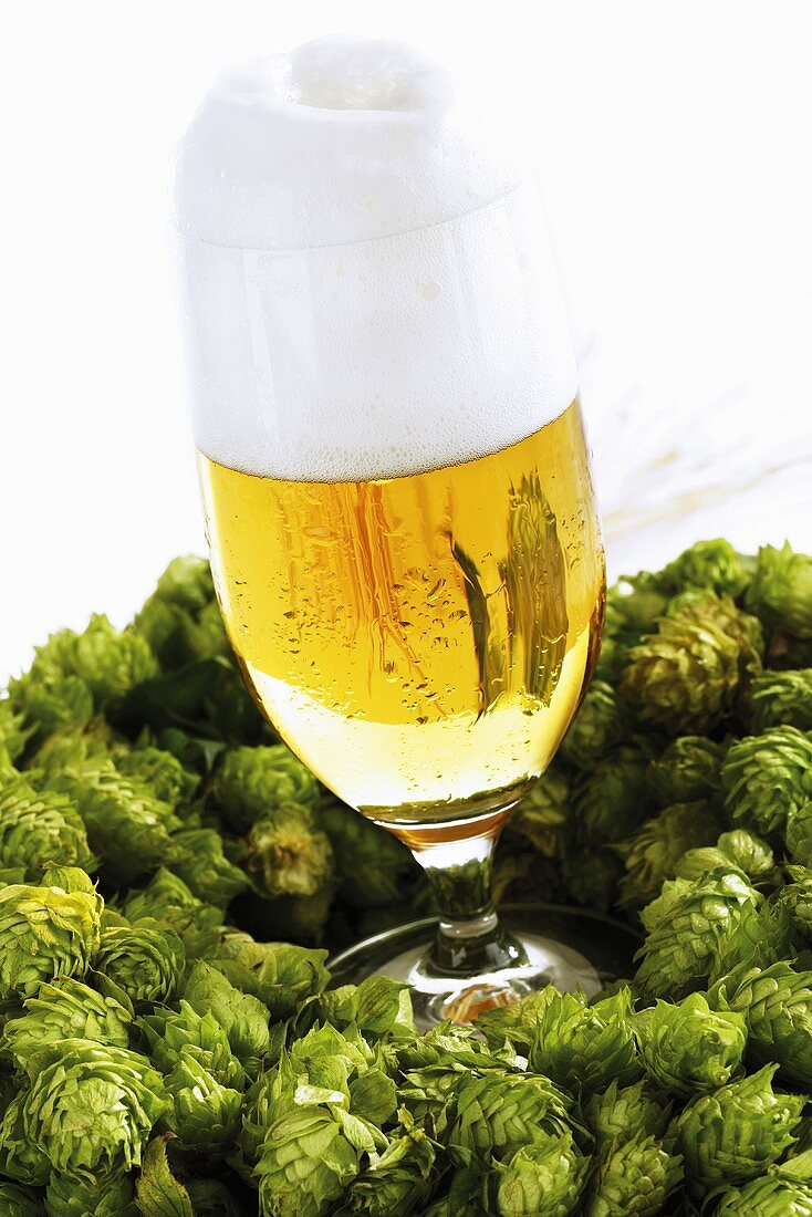 Glass of beer in hop wreath