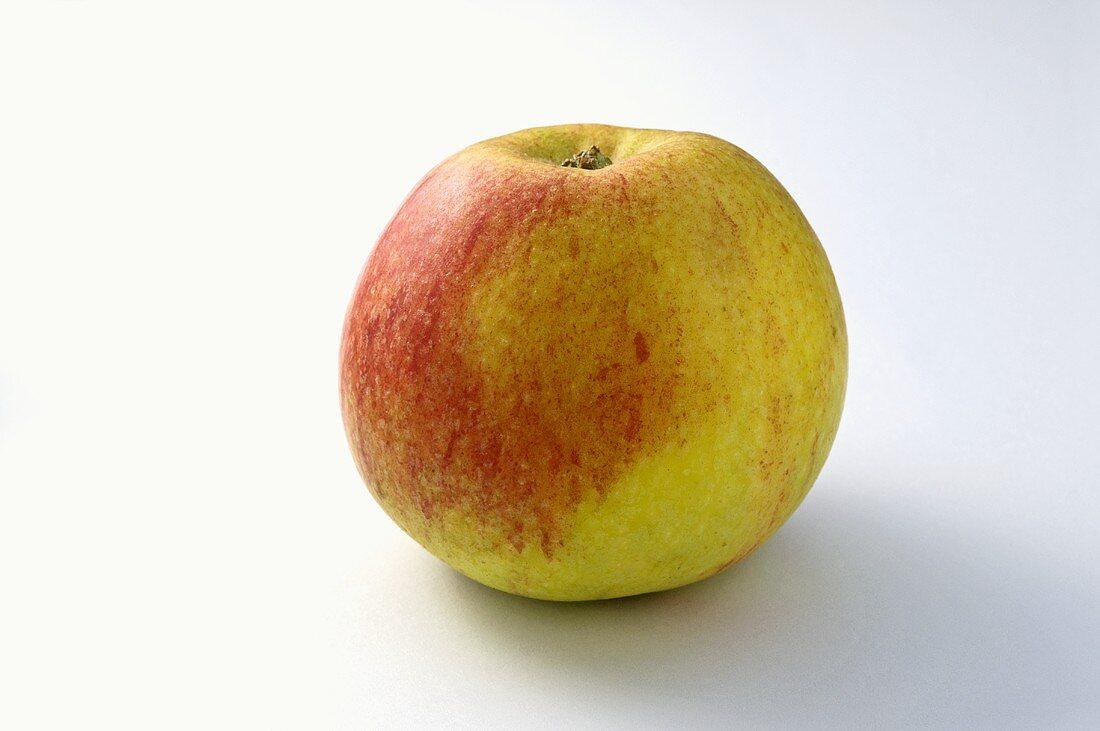 Apfel der Sorte 'Alkmene'