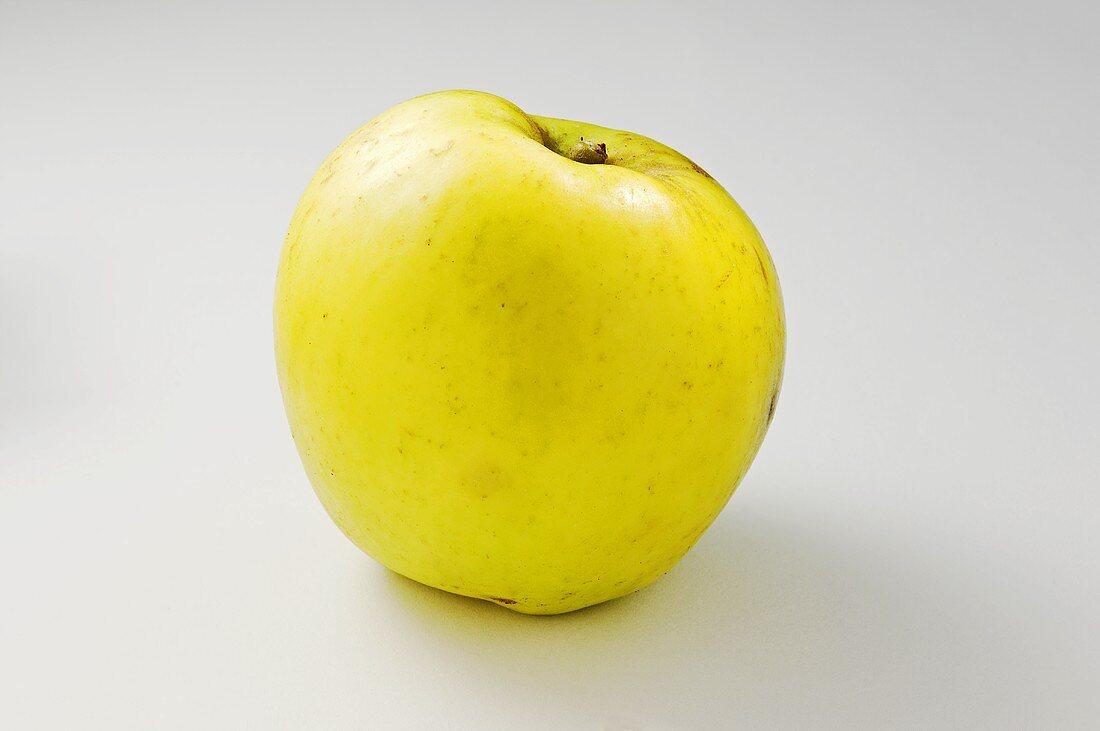 'Holsteiner Zitronenapfel' (apple variety)