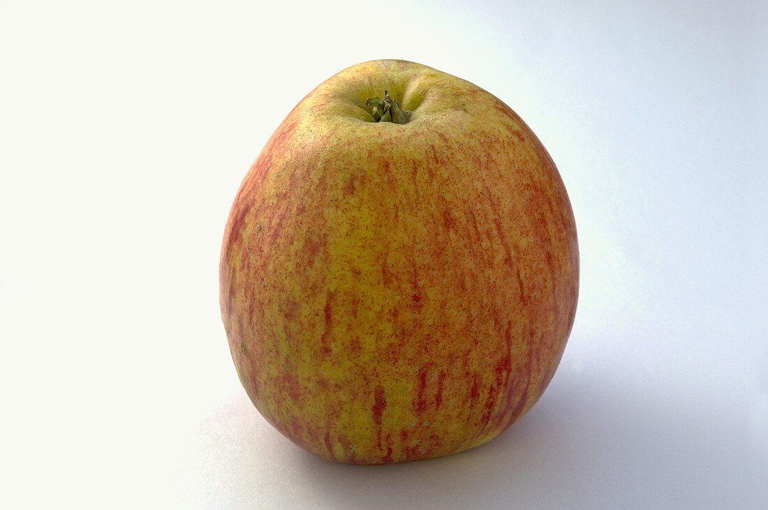 Apple, variety: 'Gelber Grafensteiner'