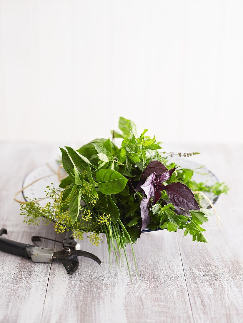 Various fresh culinary herbs and secateurs