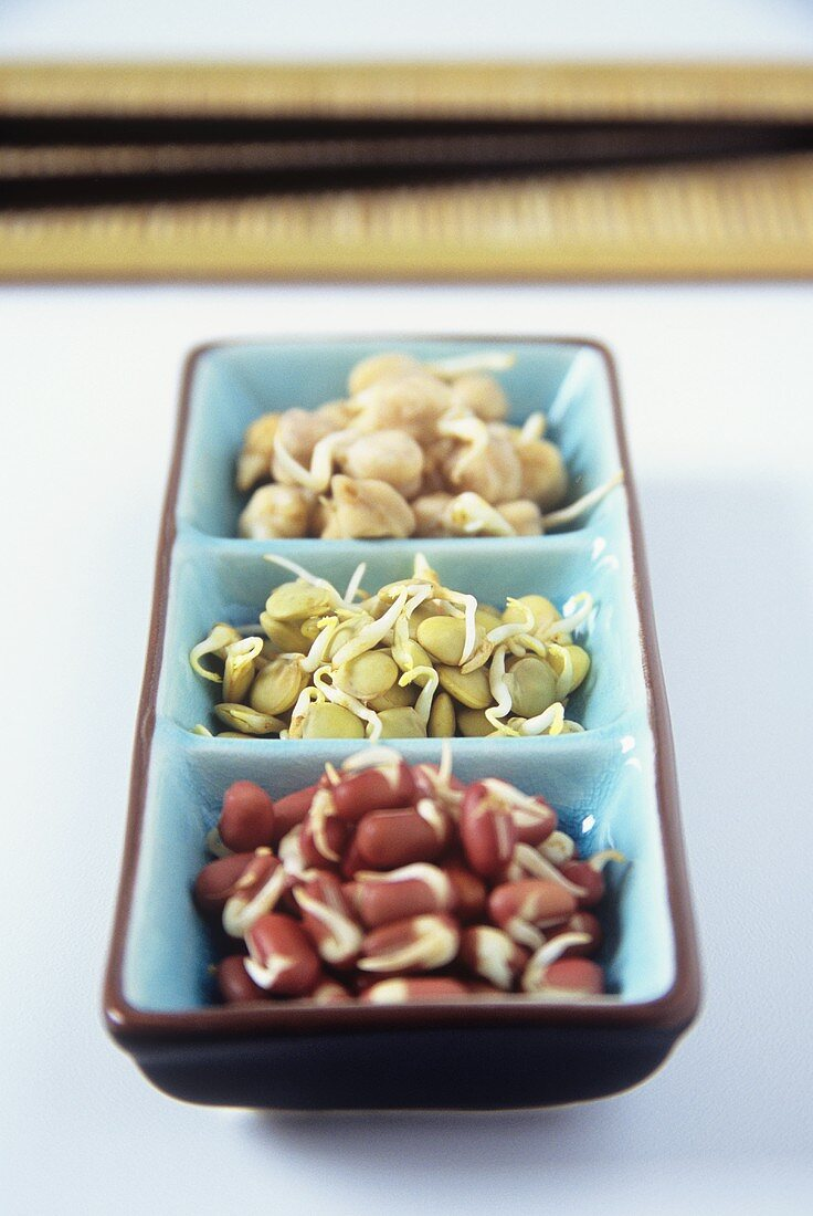 Sprouting seeds: azuki beans, lentils and chick-peas
