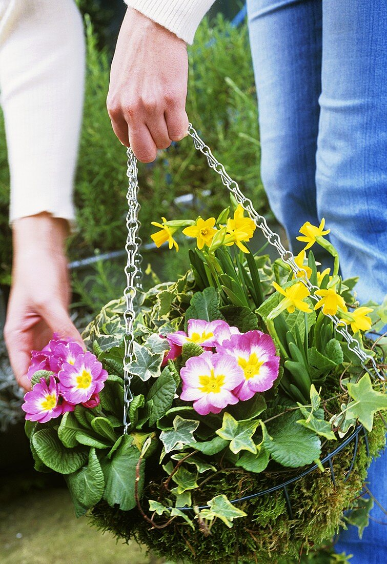 Woman's hands holding hanging basket planted with spring flowers