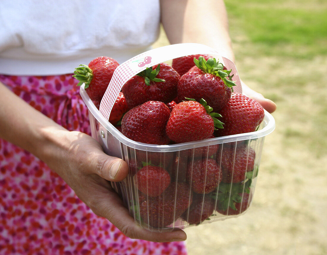 Hands holding a plastic punnet of fresh strawberries