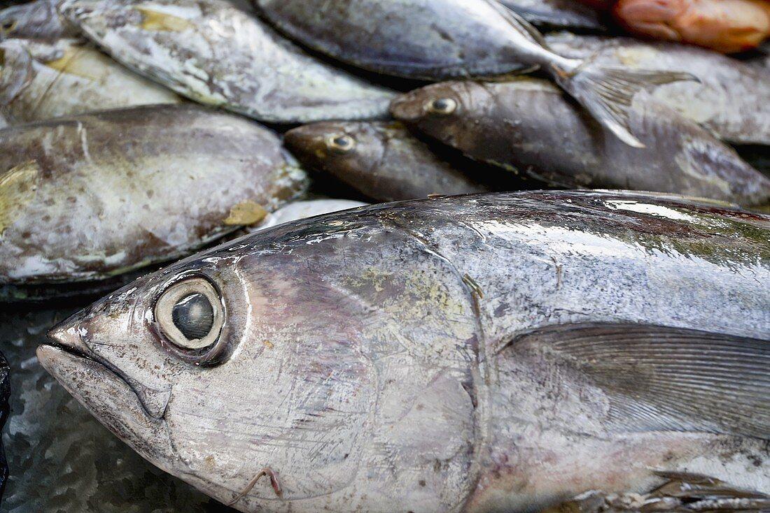 Fresh tuna at a market, Mauritius
