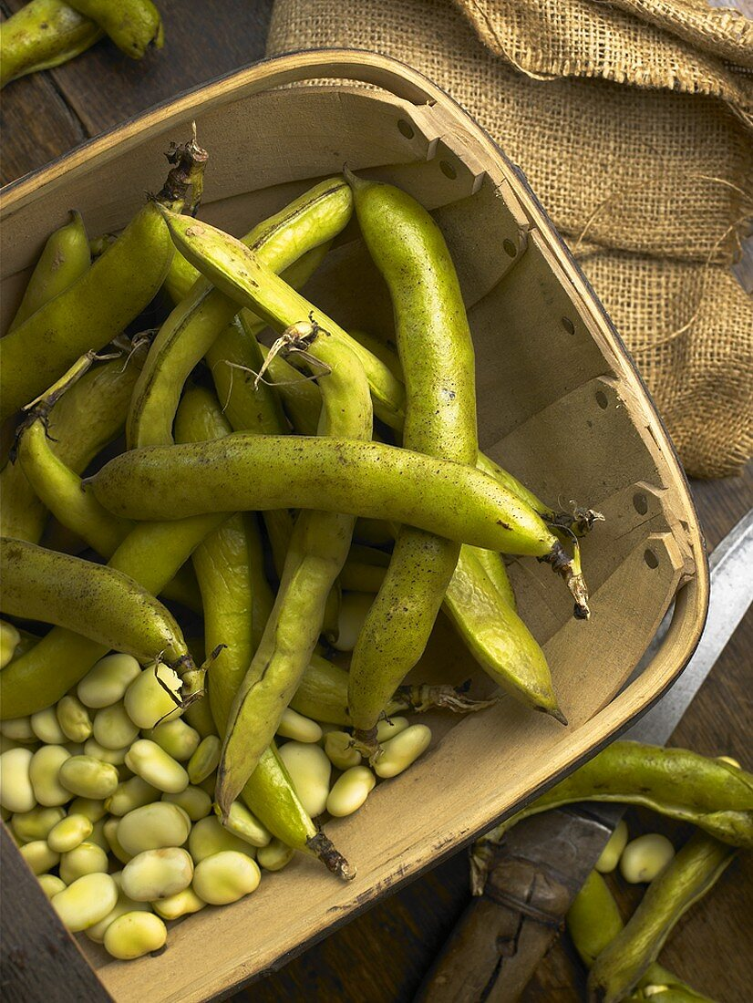 Broad beans (Beans and pods in a basket)