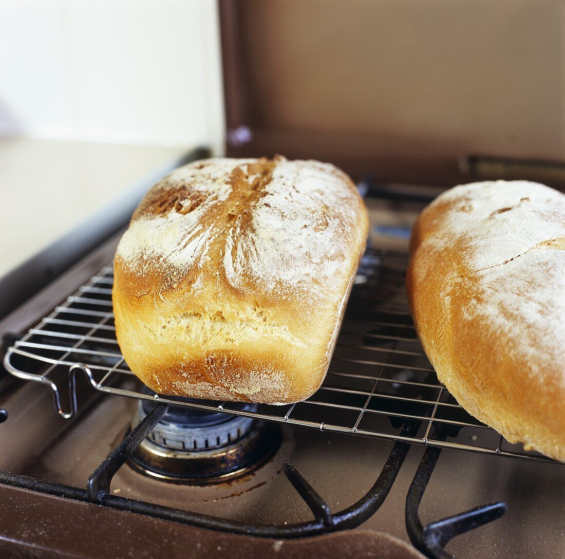 Two loaves of bread on a gas cooker
