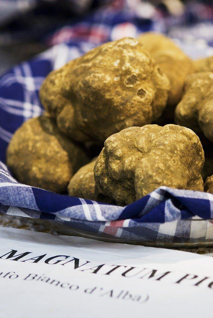 White truffles from Alba in Piedmont