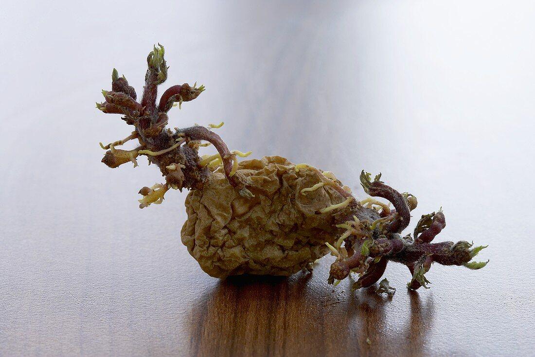A wizened potato
