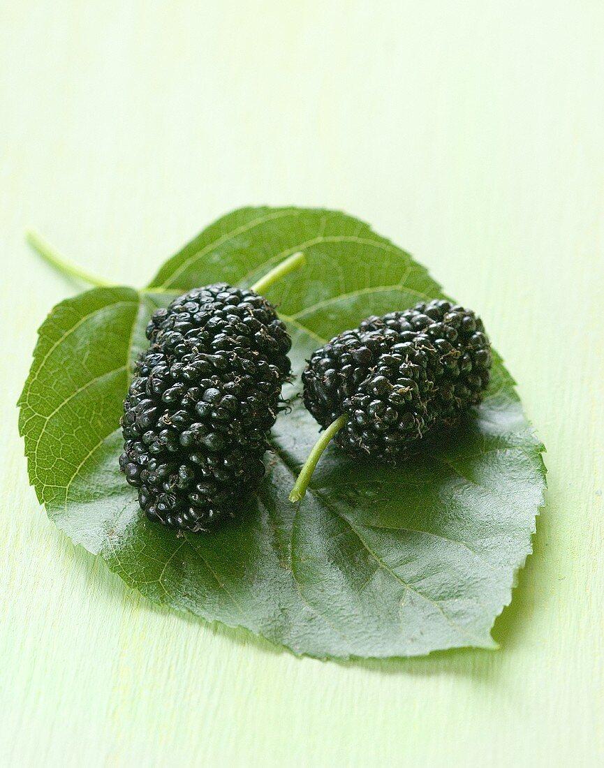 Mulberries on leaf