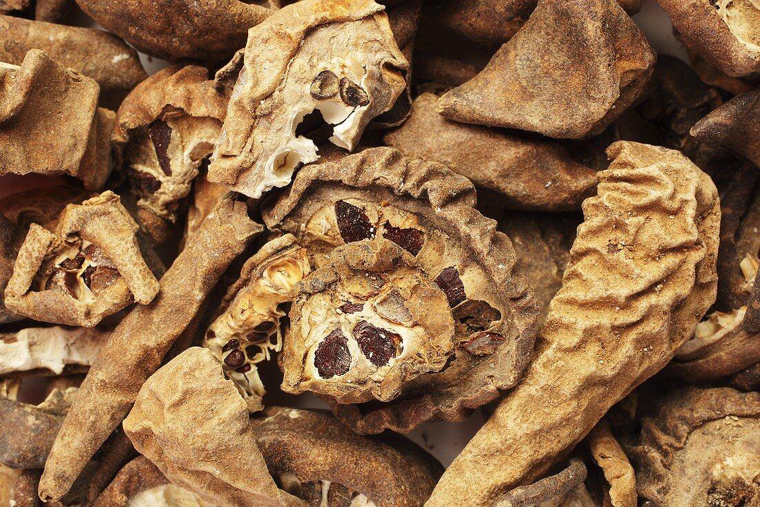 Getrocknete Früchte der fingerblättrigen Akebie