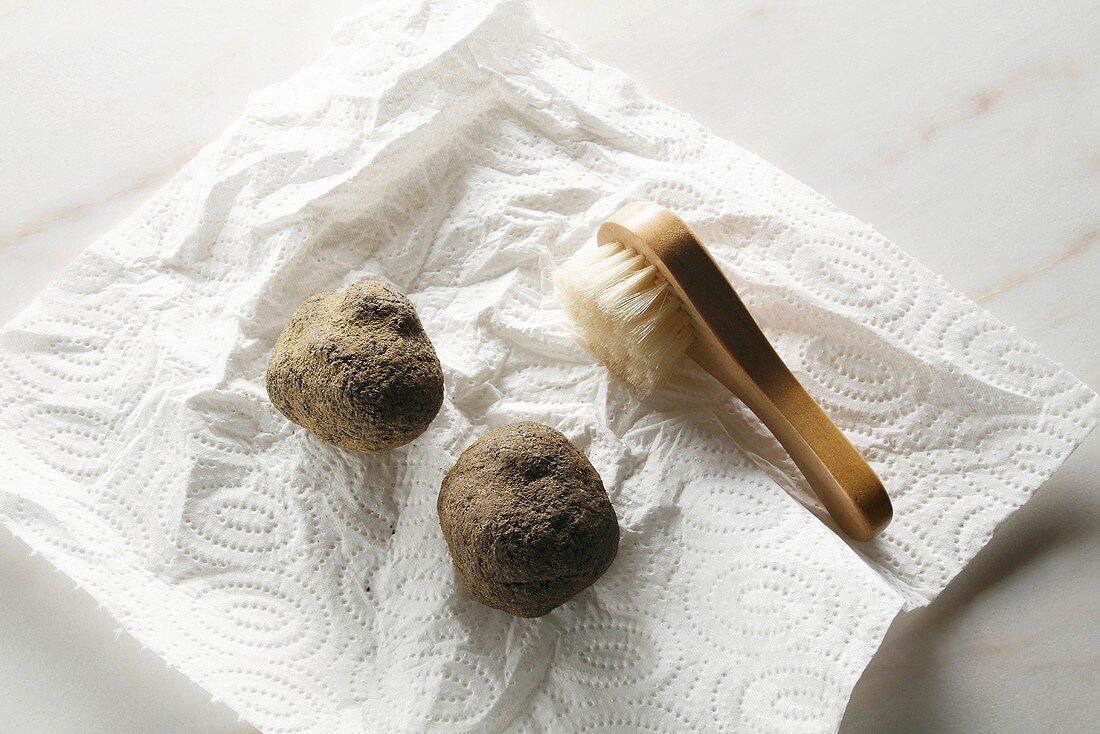 weiße Trüffeln (Albatrüffeln) auf Küchenpapier mit Bürste