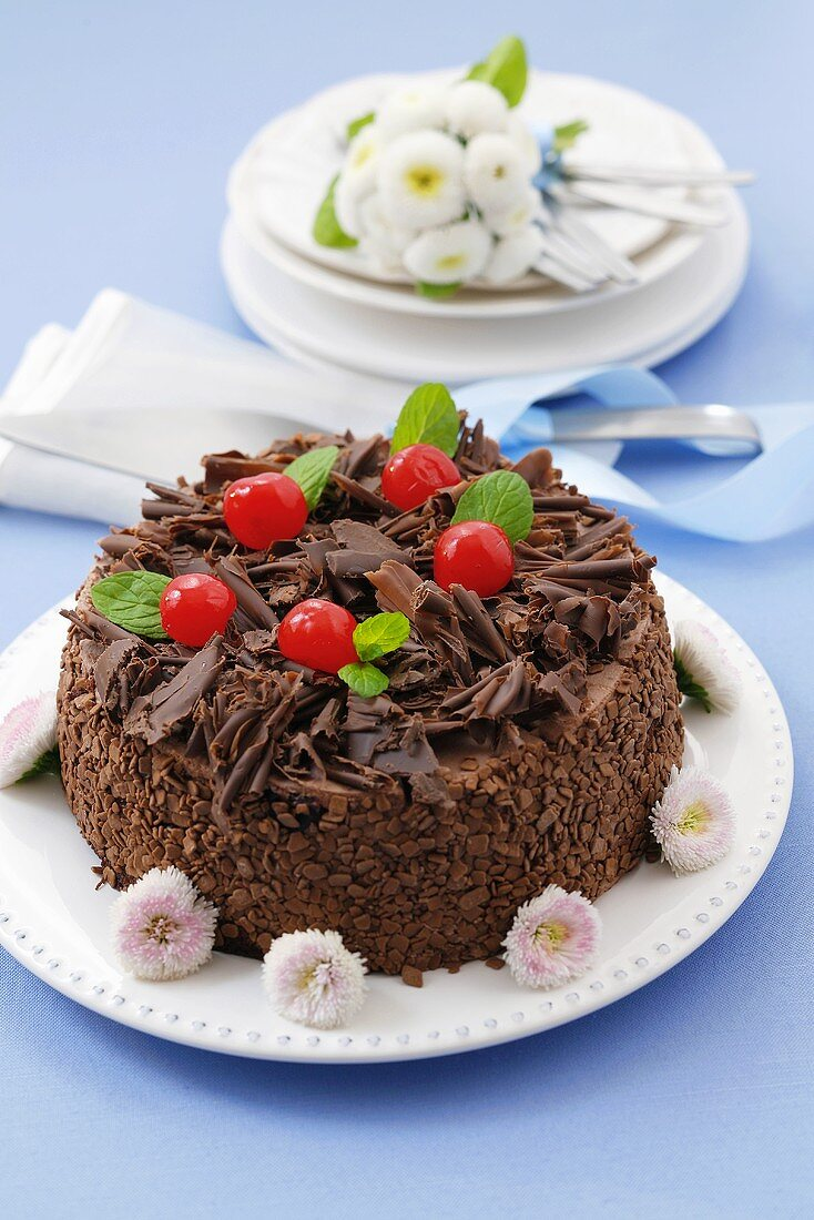 Chocolate cake with cherries, decorated with daisies