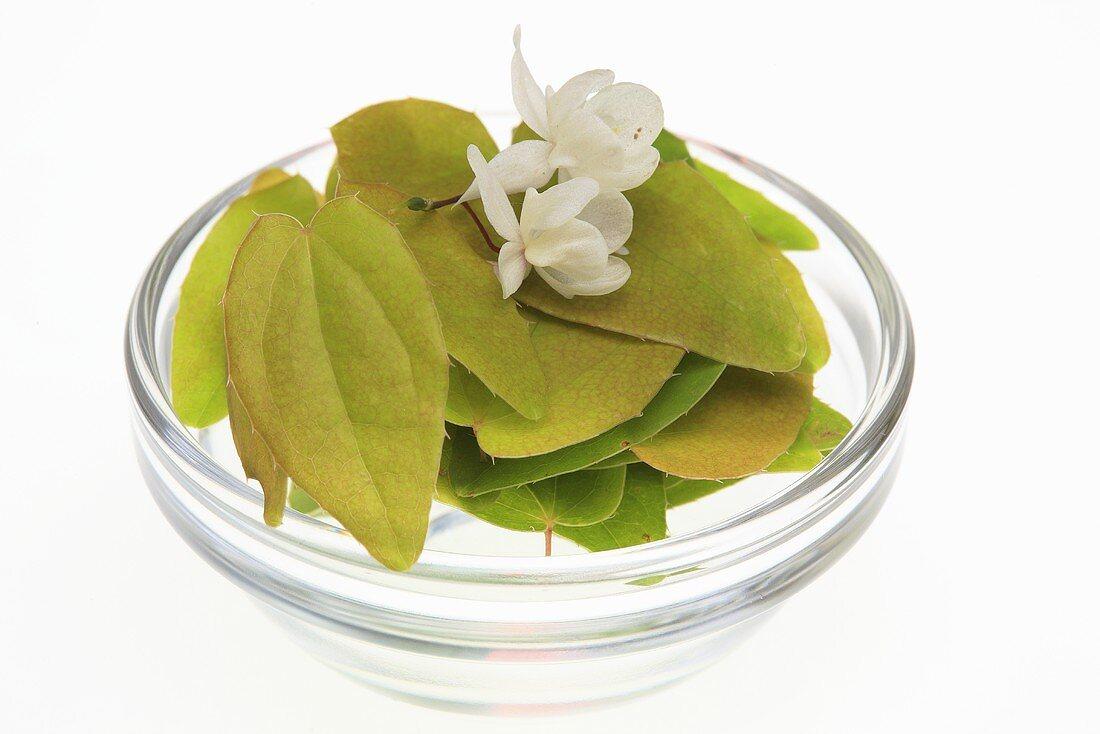 Barrenwort (Epimedium grandiflorum macranthum)