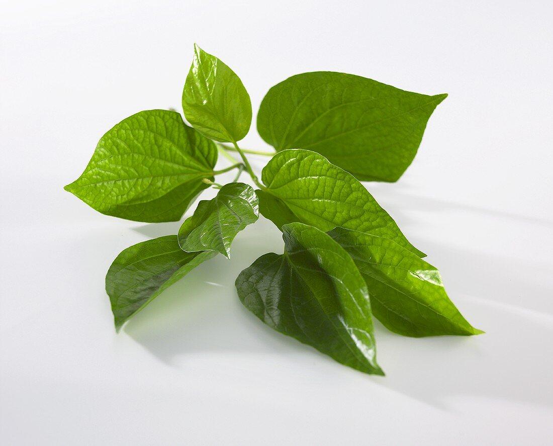 Fresh cha-plu leaves (Thailand)