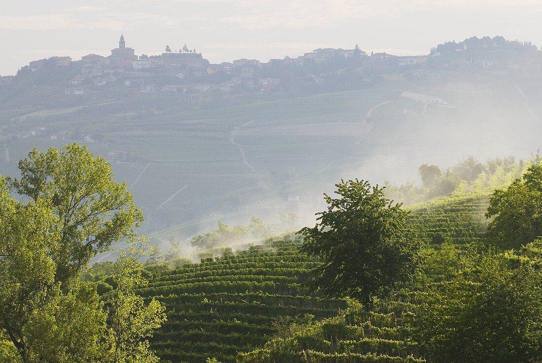 Vineyards in Langhe, Piedmont, Italy