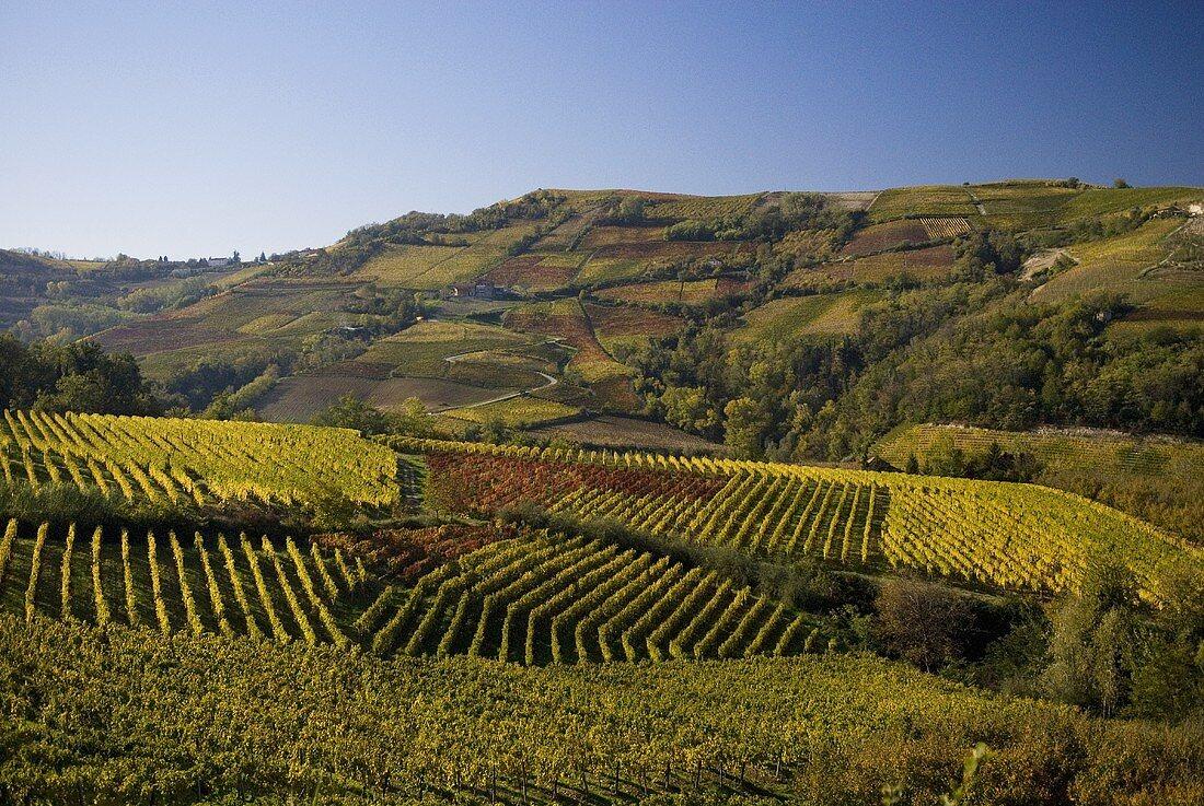Vineyards near Neive, Piedmont, Italy