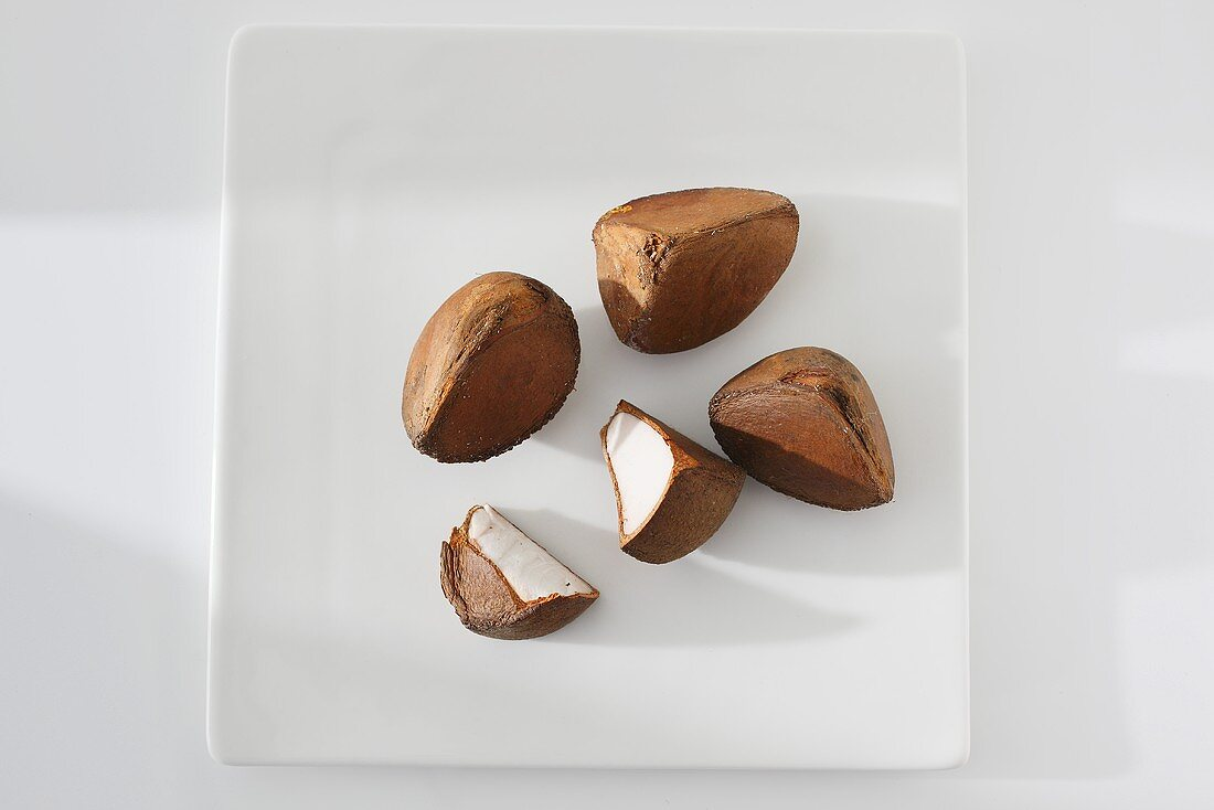 Fruit of the Andiroba tree (Carapa guianensis)