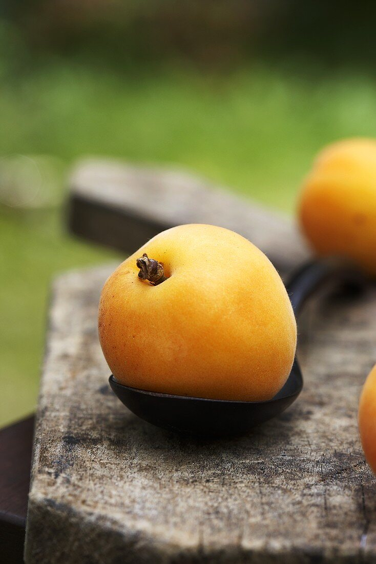 Apricot on spoon out of doors