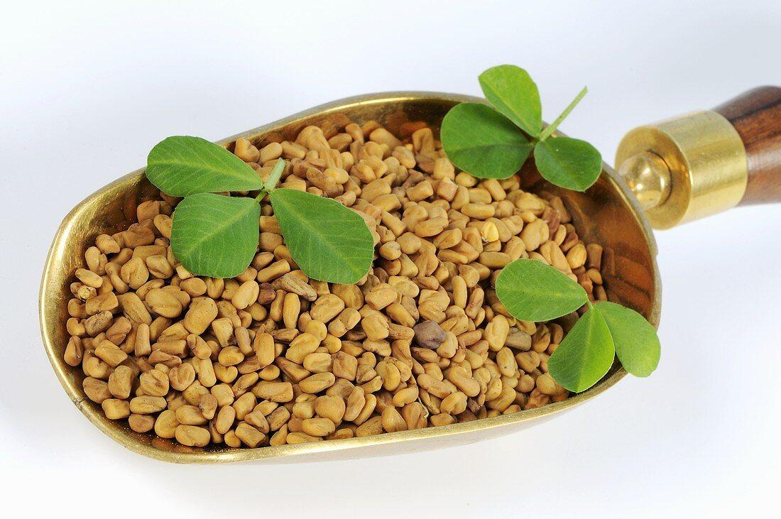 Fenugreek seeds and leaves in scoop