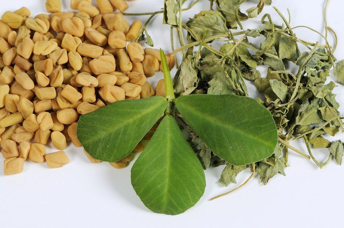 Fenugreek (seeds, fresh and dried leaves)
