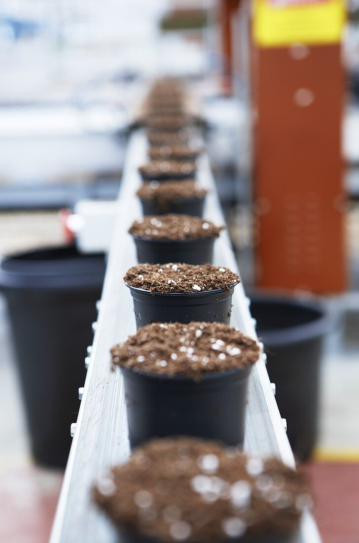 Pots of compost and coriander seed on a conveyor belt