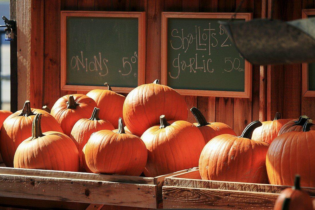 Pumpkins at a market