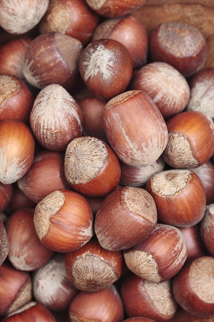 Hazelnuts, macro zoom