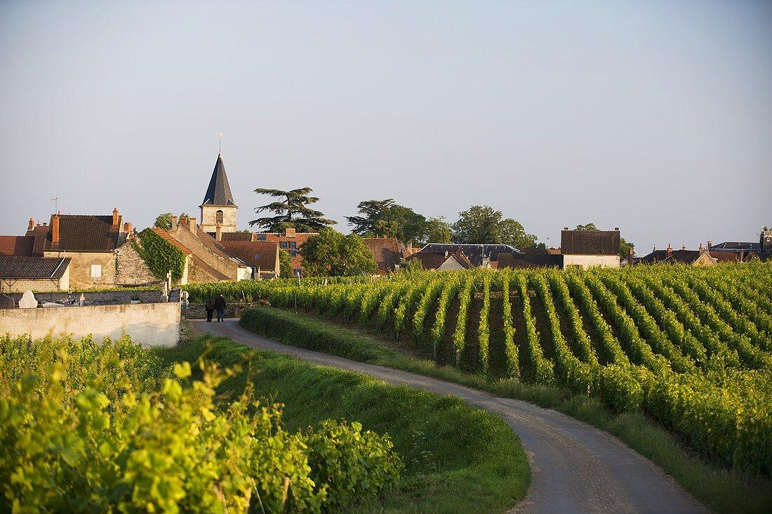The small village of Vosne-Romanée with the world famous Grand Cru region, Burgundy, France