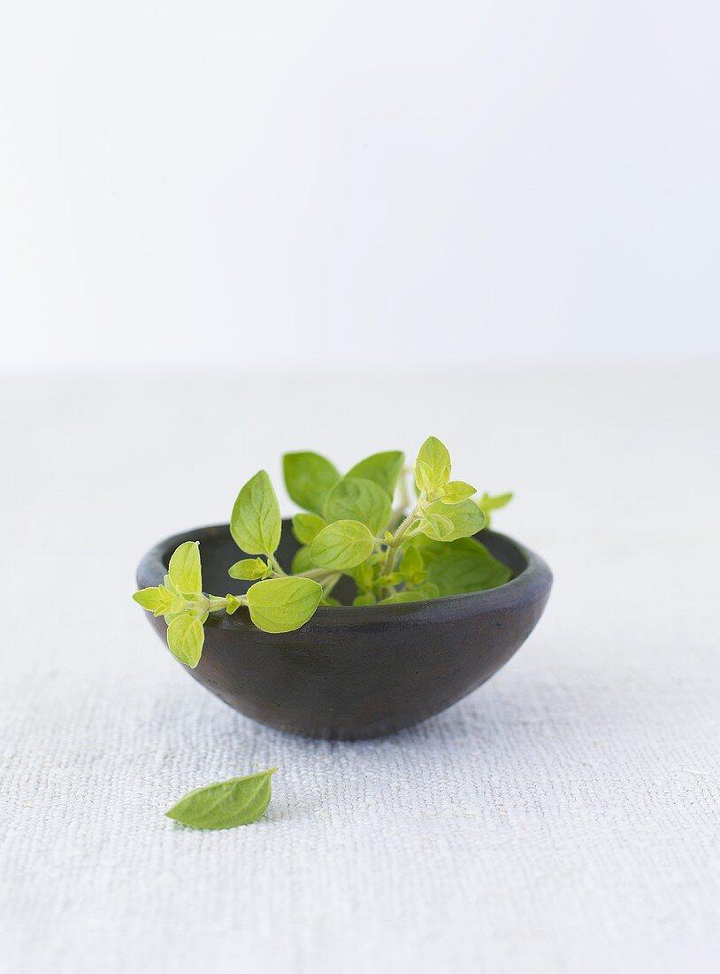 Fresh oregano in a bowl