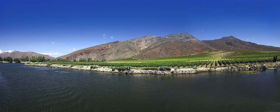 Winery in Viljoensdrift, Breede River, Robertson, Western Cape, South Africa