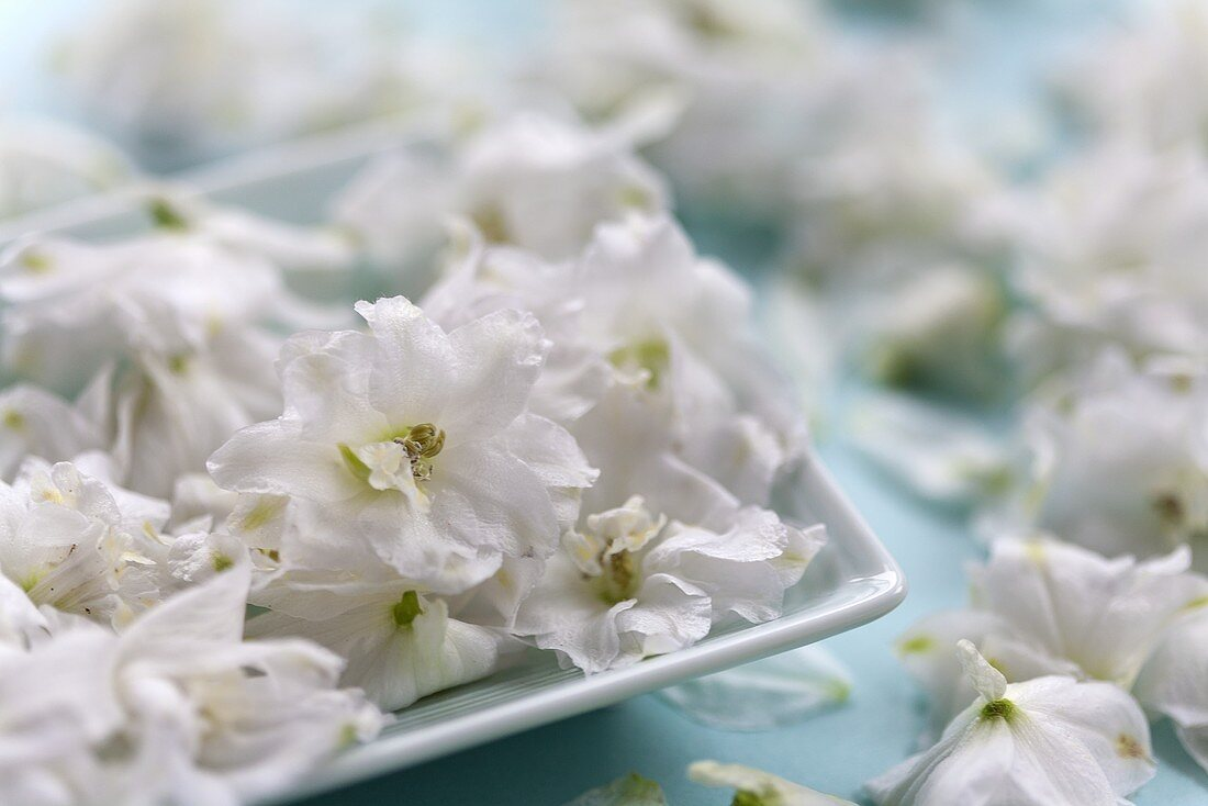 White delphiniums