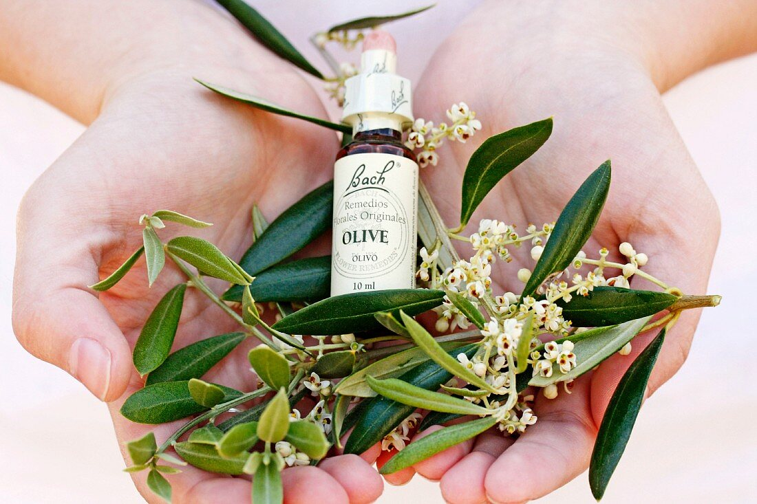 Bach flowers, olive extract