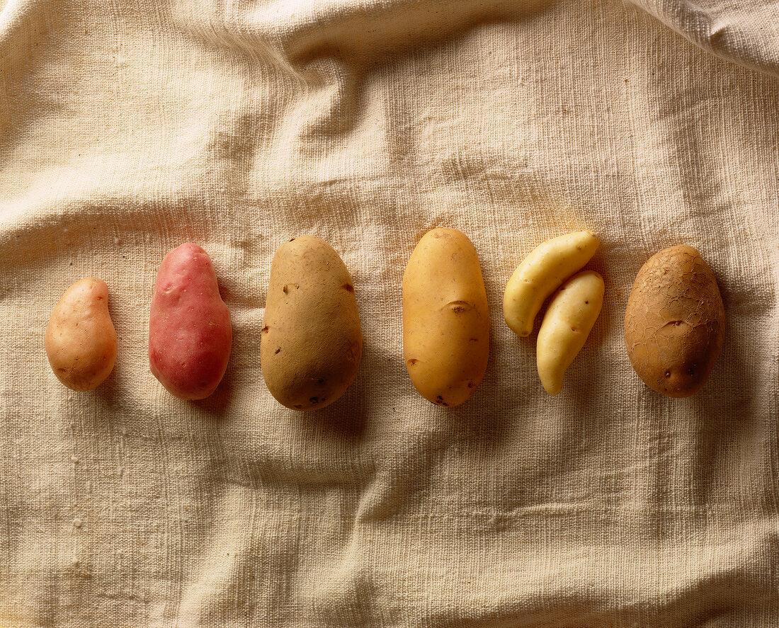 Varieties of potato