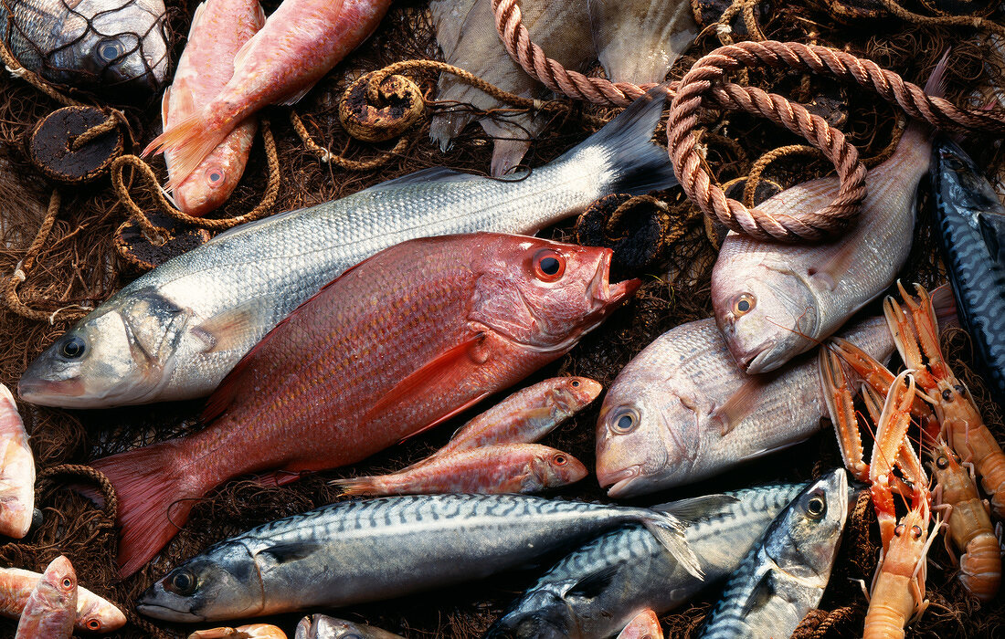 Selection of fresh fish