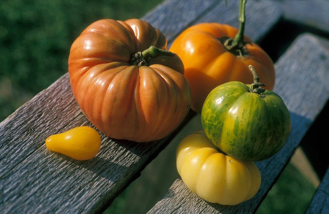 Tomatoes in a variety of colors