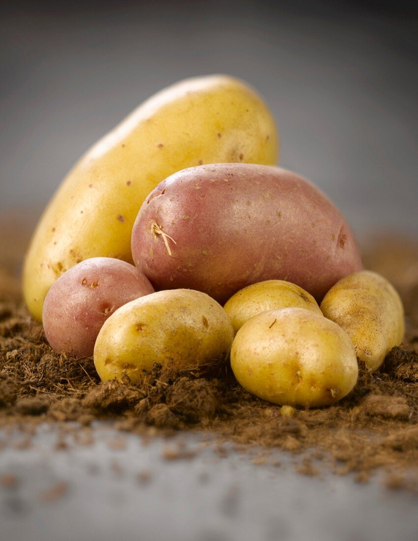 Assorted potatoes