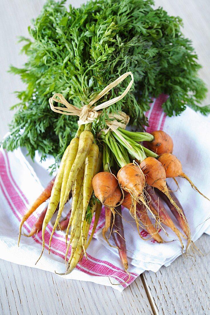 Bundle of different varieties of carrots
