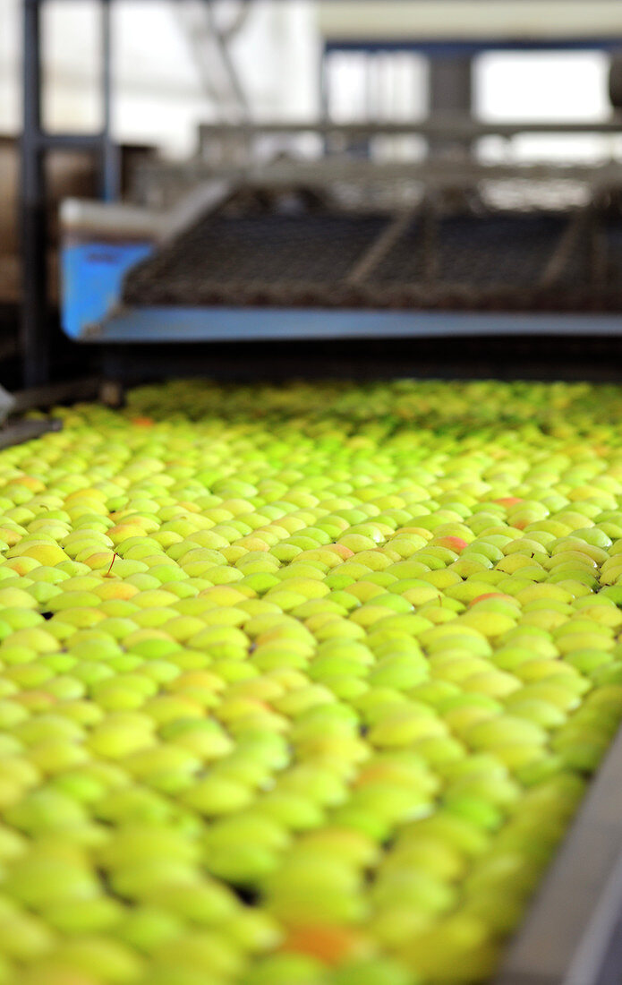 Äpfel auf Förderband in der Fabrik