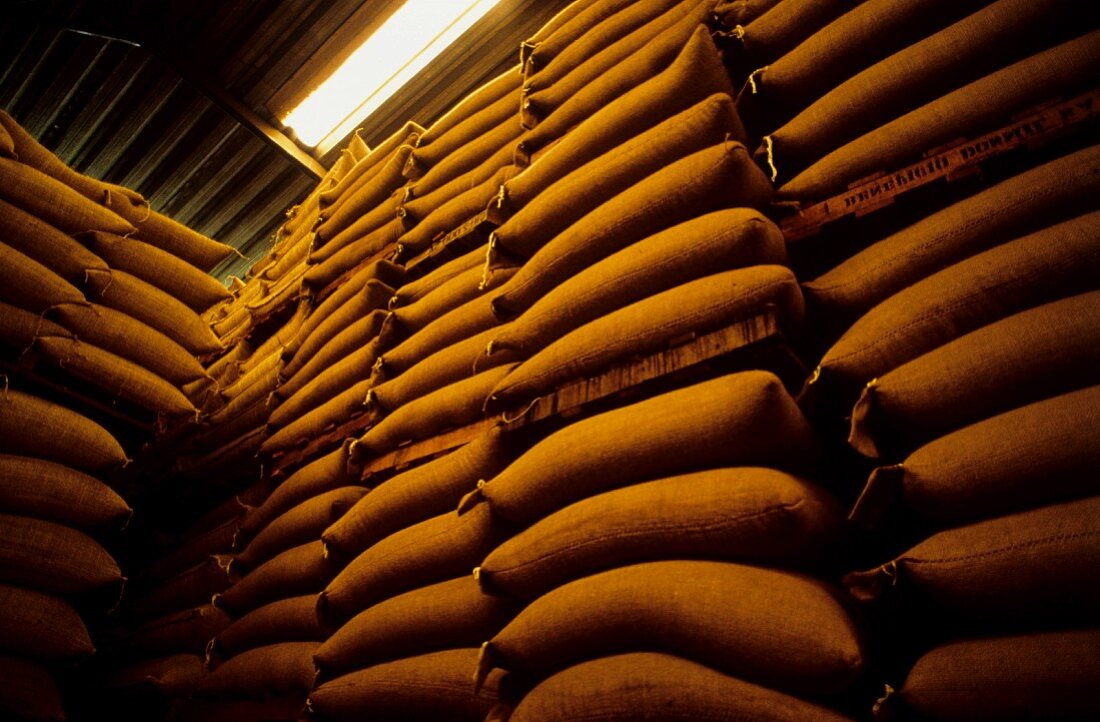 Warehouse Full of Coffee Beans in Burlap Bags