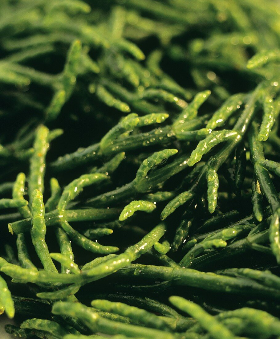 Glasswort