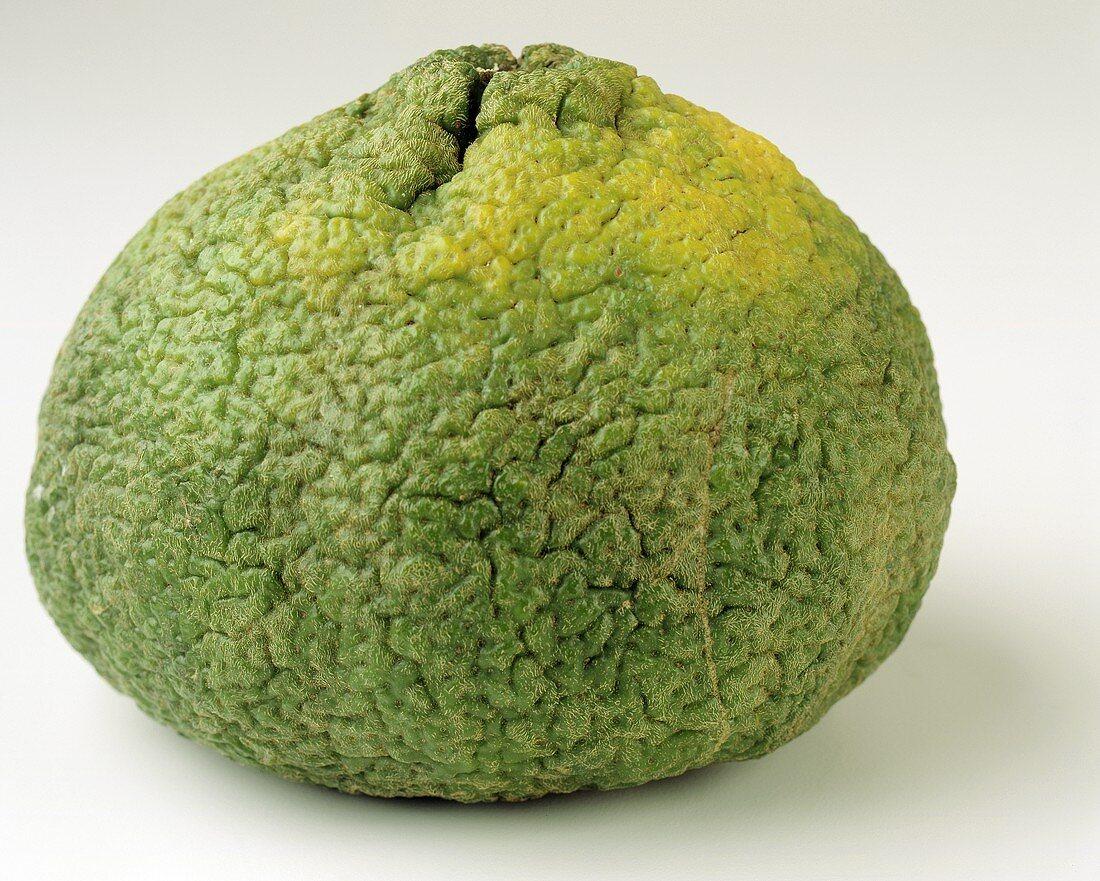 Whole Ugli Fruit