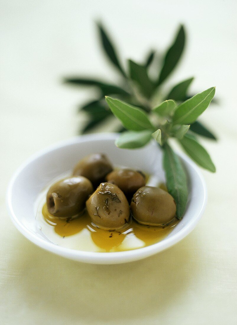 Green olives with olive oil in small bowl; olive branch