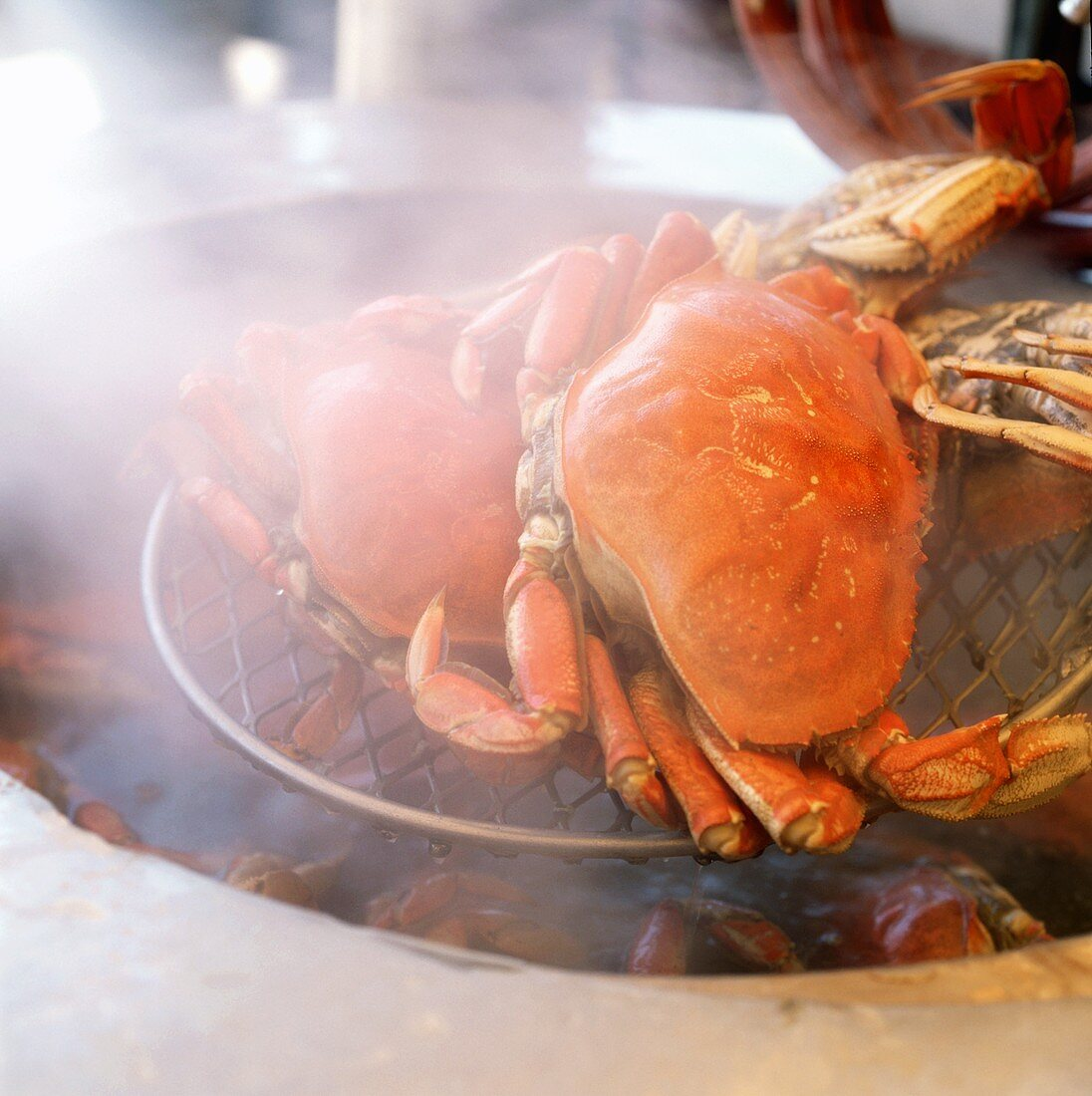 Taschenkrebse auf Sieb über kochendem Wasser