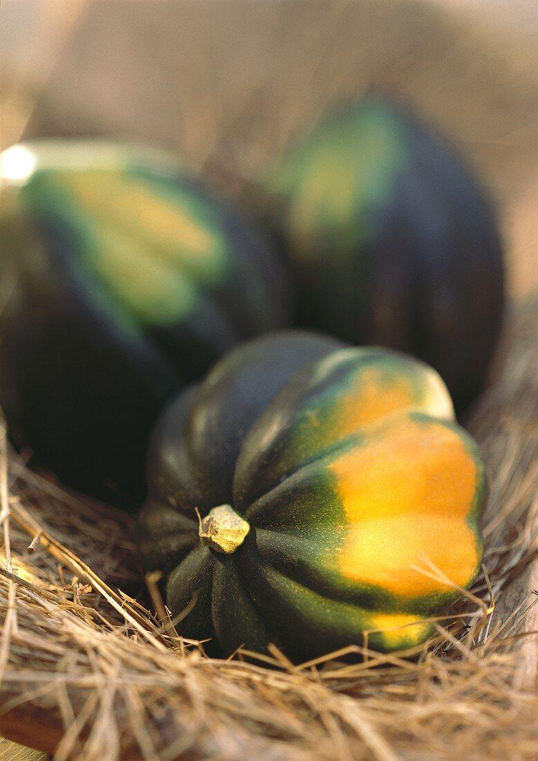 Still Life of Acorn Squash in Hay