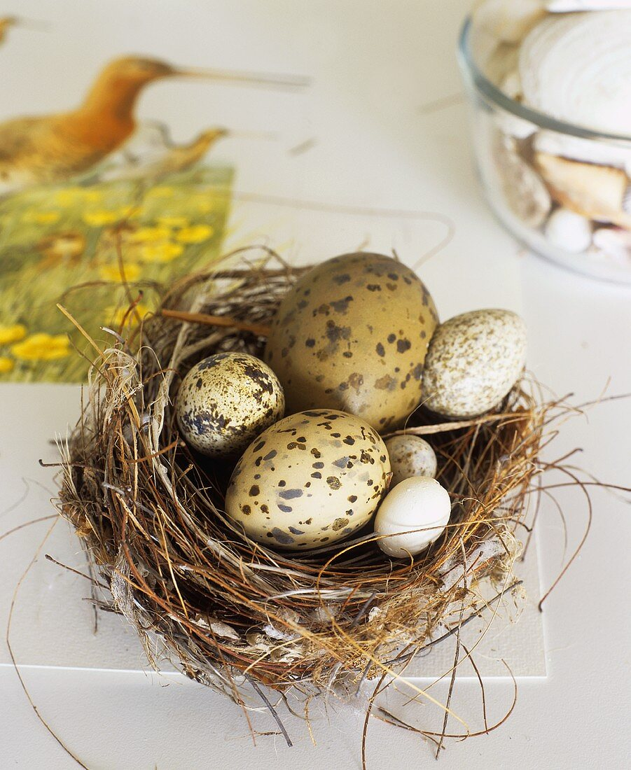 Various types of eggs in an Easter nest
