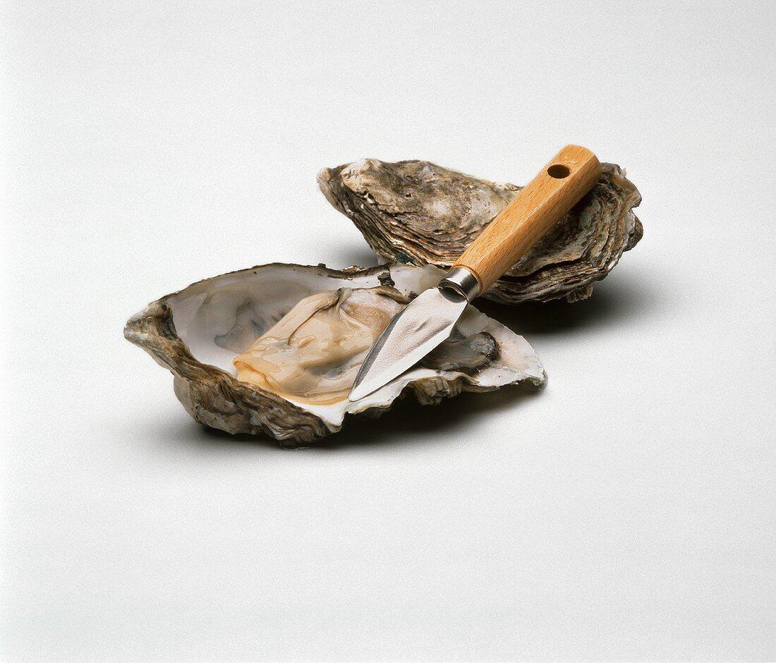 Shucked Oyster with Knife Shucked Oyster with Knife