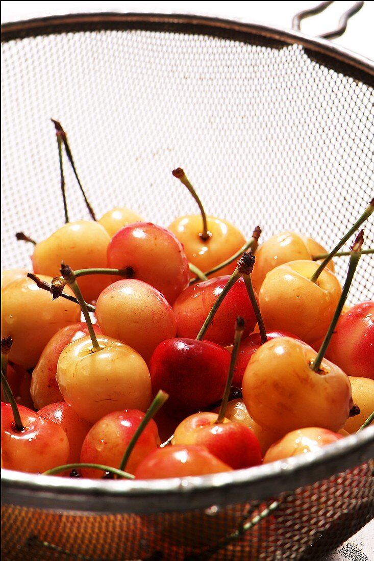 Montmorency Cherries in a Colander