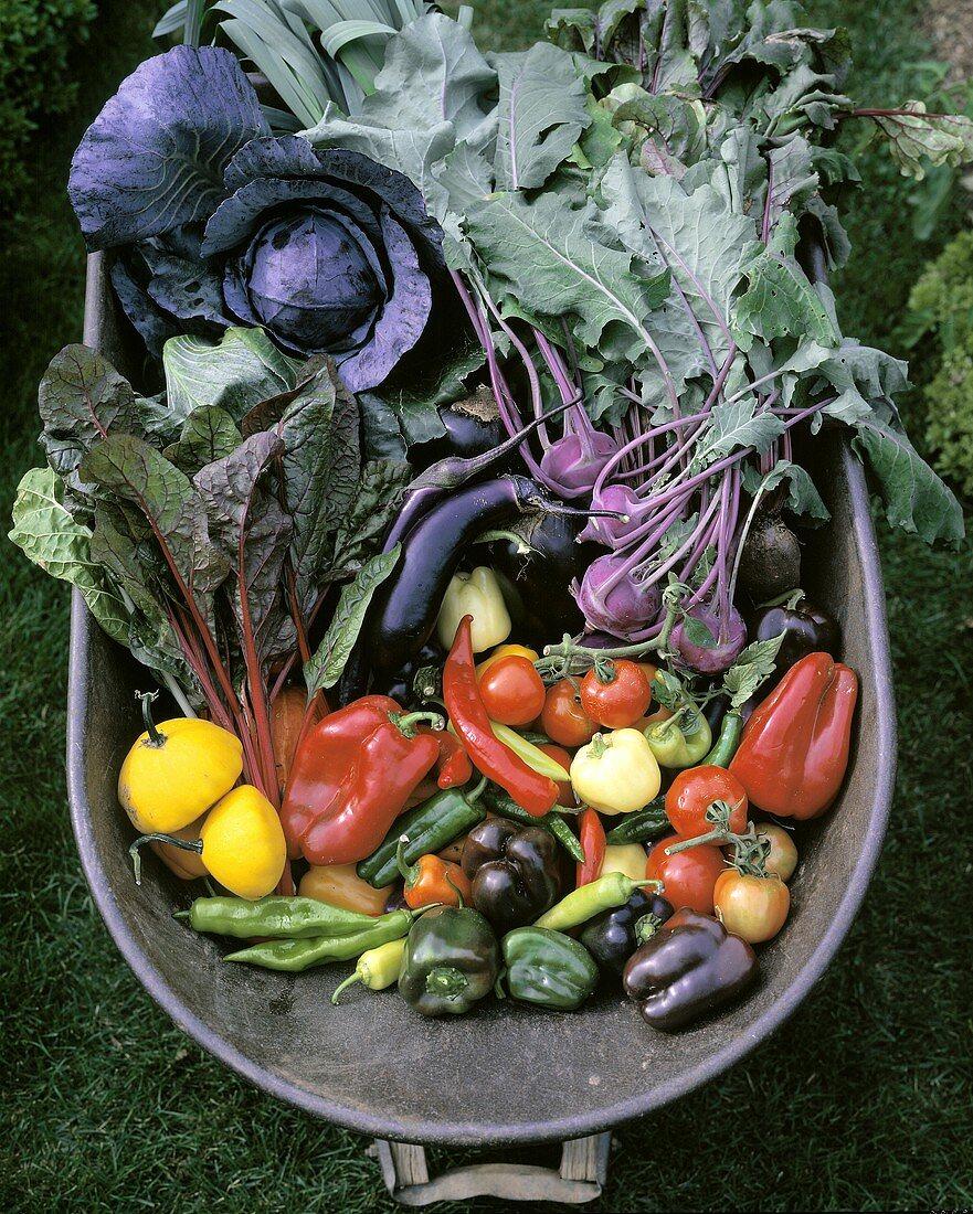 Freshly harvested vegetables in wheelbarrow